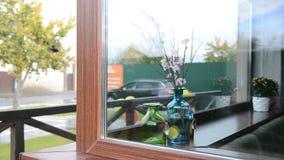 在一个花瓶的明亮的美丽的花在窗口 股票视频