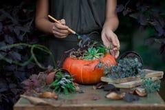 在一个花瓶的美丽的秋天花束从南瓜 免版税库存照片