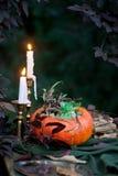 在一个花瓶的美丽的秋天花束从南瓜 图库摄影