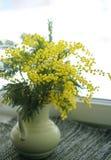 在一个花瓶的黄色mimoses在窗口背景  免版税库存图片