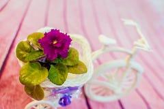 在一个花盆的紫罗兰以三轮车的形式 免版税库存图片
