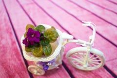 在一个花盆的紫罗兰以三轮车的形式 免版税库存照片