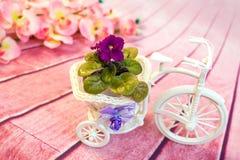 在一个花盆的紫罗兰以三轮车的形式 免版税图库摄影