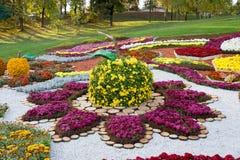 在一个苹果的形状的花床与五颜六色的菊花的 Parkland在基辅,乌克兰 库存图片