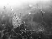 在一个草甸上的蜘蛛网日出时间的 免版税图库摄影