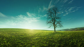 在一个草甸的一棵孤立树日出的,田园诗,美妙的风景 库存图片