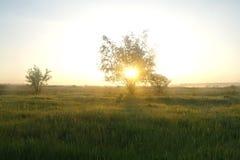 在一个草甸的一棵树在黎明 库存照片