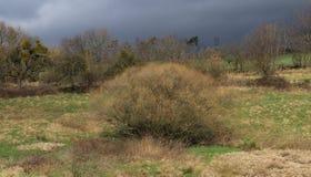 在一个草甸的不可思议的发光的分蘖性树温和的德国冬天季节的 库存图片
