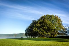 在一个草甸的大绿色圆的树在与蓬松分类的蓝天下 免版税库存图片