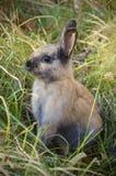 在一个草甸的小的兔子在公园中 免版税库存图片