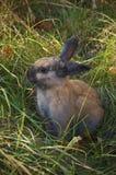 在一个草甸的小的兔子在公园中 库存照片
