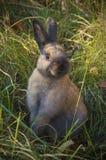 在一个草甸的小的兔子在公园中 库存图片