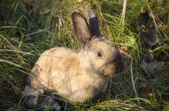在一个草甸的小的兔子在公园中 图库摄影