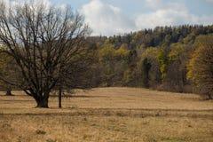 在一个草甸的树秋天森林的 免版税库存图片