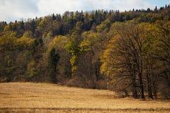 在一个草甸的树秋天森林的 免版税图库摄影