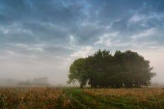 在一个草甸的秋天有薄雾的场面有橡树的 免版税库存照片