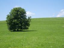 在一个草甸的结构树有天空的 库存照片