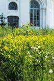 在一个草甸的花有背景 免版税库存照片