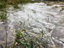 在一个草甸/领域的结冰的水坑在埃菲尔山,有冻草自然公园的埃菲尔山德国 库存图片