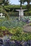 在一个菜园的稻草人 库存图片