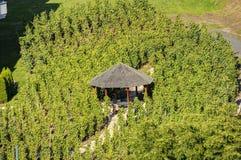 在一个葡萄园中间的一个小木眺望台在布拉格,捷克共和国 免版税库存图片