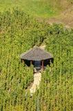 在一个葡萄园中间的一个小木眺望台在布拉格,捷克共和国 库存照片