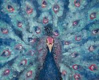 在一个蓝色和桃红色孔雀,色的鸟,幻想的画象帆布的油画  免版税库存照片