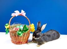 在一个蓝色和白色背景美丽的篮子和兔宝宝 免版税库存图片