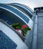 在一个蓝色房子的窗台的红色花从下面 图库摄影