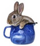 在一个蓝色杯子的小的逗人喜爱的兔子 免版税库存照片