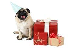 在一个蓝色欢乐帽子的一个哈巴狗,在一些件欢乐礼物附近坐 背景查出的白色 免版税库存照片