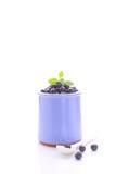 在一个蓝色瓶子的蓝莓 免版税库存照片