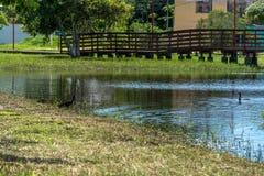 在一个蓝色盐水湖的黑鸟 库存图片
