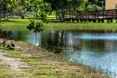 在一个蓝色盐水湖的黑鸟 库存照片