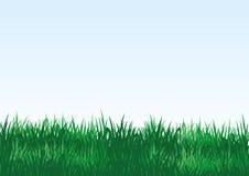 在一个蓝色背景的绿草 向量例证