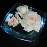 在一个蓝色花瓶的大白玫瑰在黑背景的玻璃 库存照片