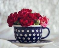 在一个蓝色茶杯的康乃馨 免版税库存照片