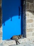 在一个蓝色金属门附近的猫在老贾法角 免版税库存照片