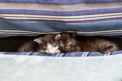 在一个蓝色长沙发的两只小猫 免版税库存照片
