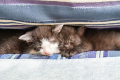 在一个蓝色长沙发的两只小猫 库存照片