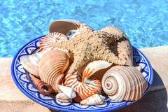 在一个蓝色陶瓷碗的贝壳 免版税图库摄影