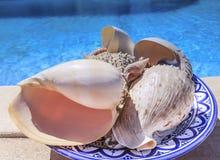 在一个蓝色陶瓷碗的贝壳 免版税库存照片