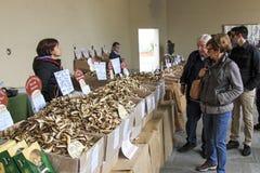在一个蘑菇供营商前面的游人蒙卡尔沃,意大利块菌市场的  库存照片