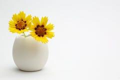 在一个蛋形花瓶的金鸡菊 库存照片