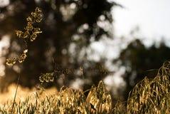 在一个蜘蛛网的一只蜘蛛在黎明在森林里 图库摄影