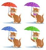 在一个蝶形领结的滑稽的猫与伞 库存照片