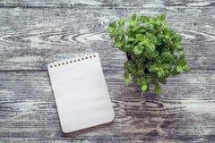 在一个螺旋的空白的笔记本与在一个灰色桌面上的一棵盆的植物 免版税库存照片