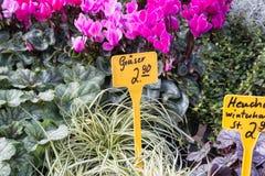 在一个街市上的新鲜的四季不断的花在秋天10月 免版税图库摄影