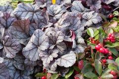 在一个街市上的新鲜的四季不断的花在秋天10月 库存图片
