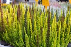 在一个街市上的新鲜的四季不断的花在秋天10月 库存照片